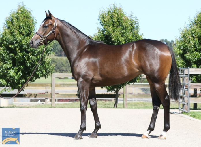 Medaglia D'oro X Apologynotaccepted