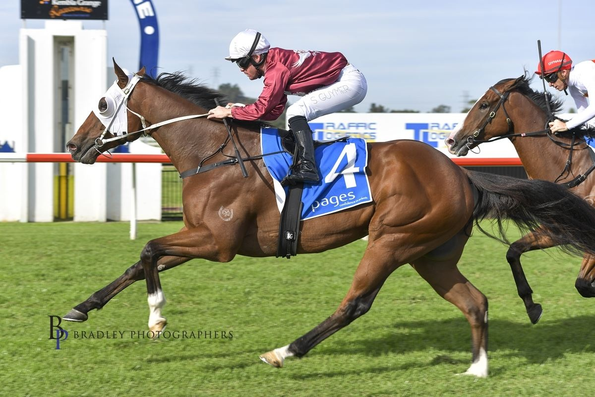 Redoute's Choice X Gold Fortune