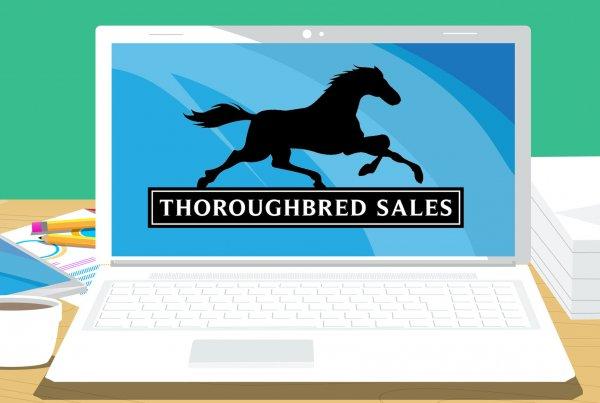 New Website Upgrades – Thoroughbred Sales