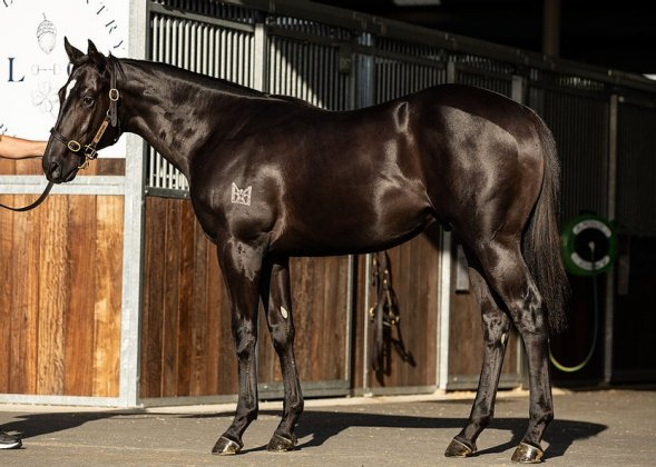Feature Horse of the Week – Lonhro x Sports Writer