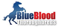 Blue Blood Thoroughbreds