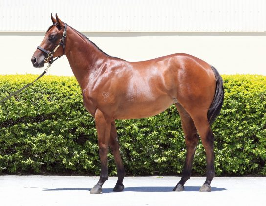 Feature Horse of the Week – Nicconi x Pretty Fancy