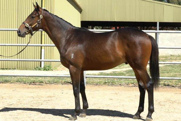 Feature Horse of the Week – Tosen Stardom x Sav Royal