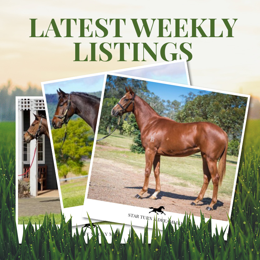 Latest Weekly Listings – Star Turn, So You Think and Rich Enuff